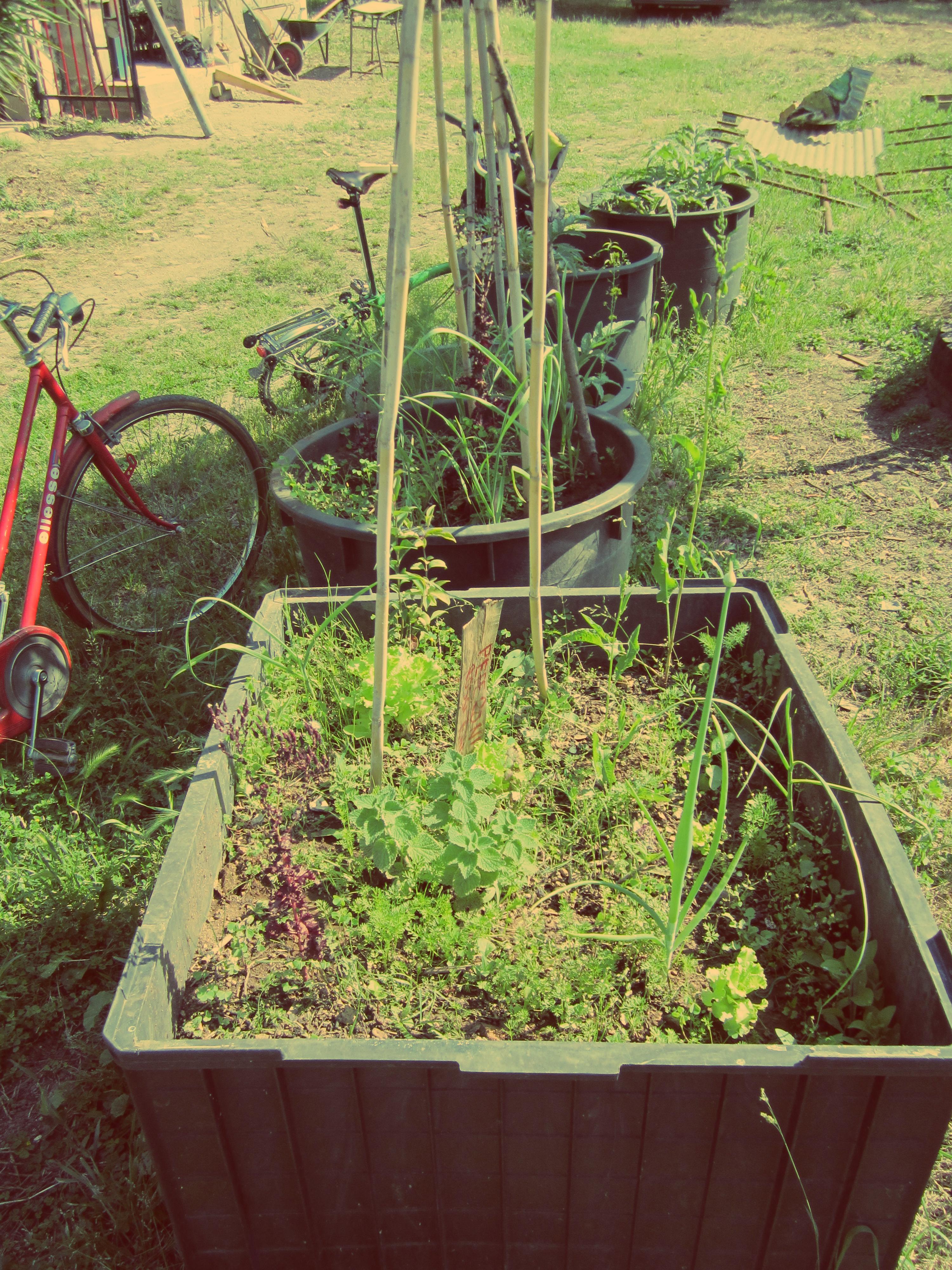 Cheap come progettare un giardino da soli esempi progetti on line per with progettare il - Progettare il giardino da soli ...
